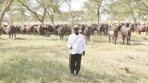 President Museveni as farmer